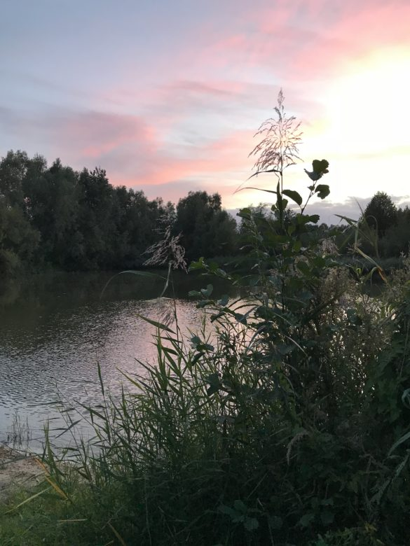 Campsite Landgoed De Wielewaal | Pink skies at our waterfront place